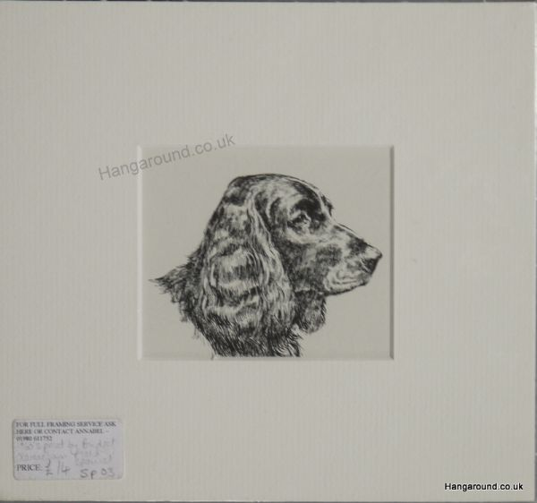 Field Spaniel  - head  1960's print by Bridget Olerenshaw